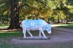 CowsNC 1