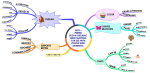 WHY I  PREFER  BUZAN ORGANIC  MIND MAPPING  FOR USE WITH  PEOPLE WITH  DEMENTIA